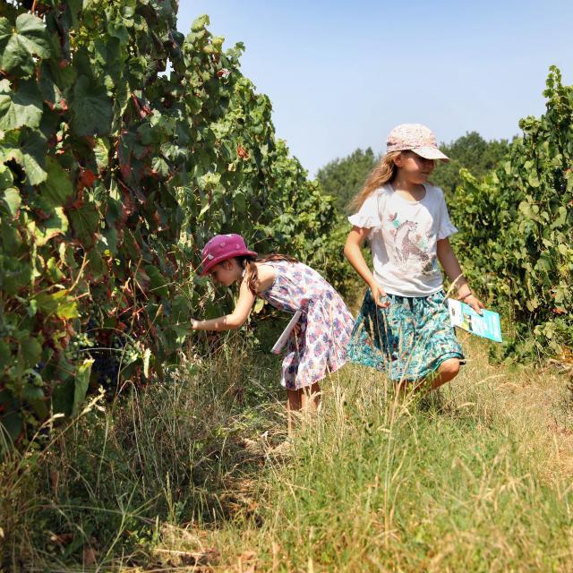 De nombreuses activités dans les vignobles se développent