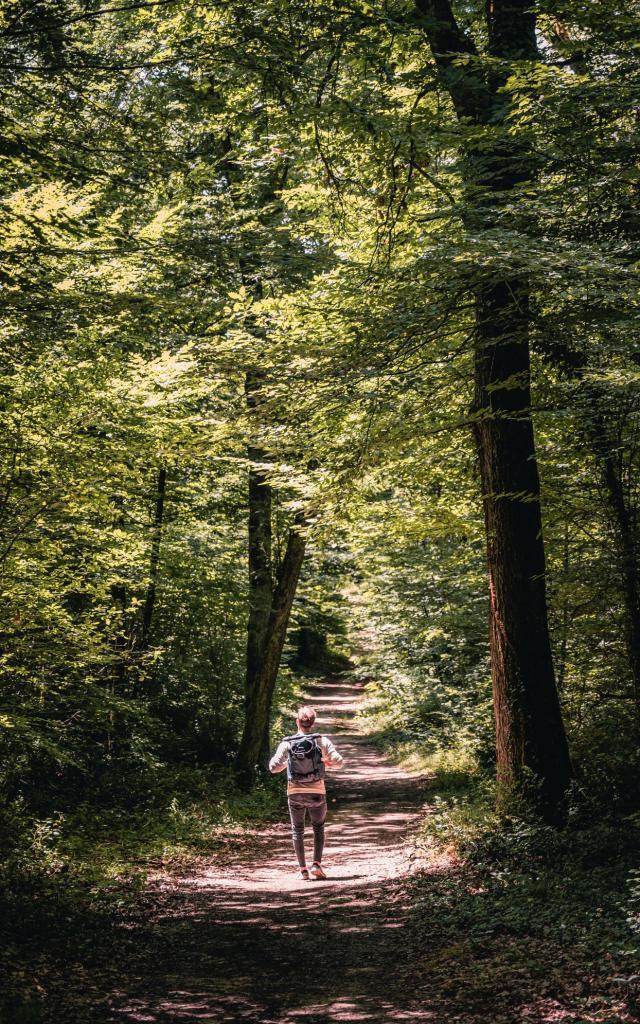Forêt d'Agre de Montech