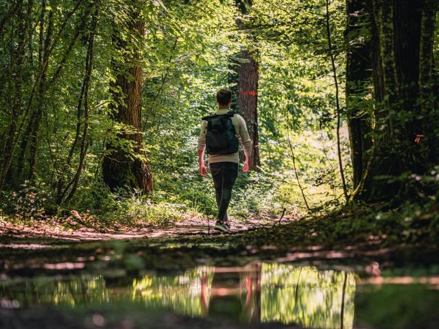 Randonnée Forêt Agre Tarn et garonne