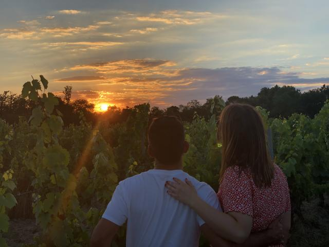 Amour Dans Les Vignes