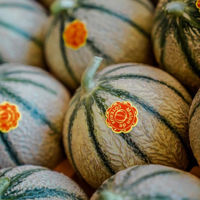 Melon du Quercy