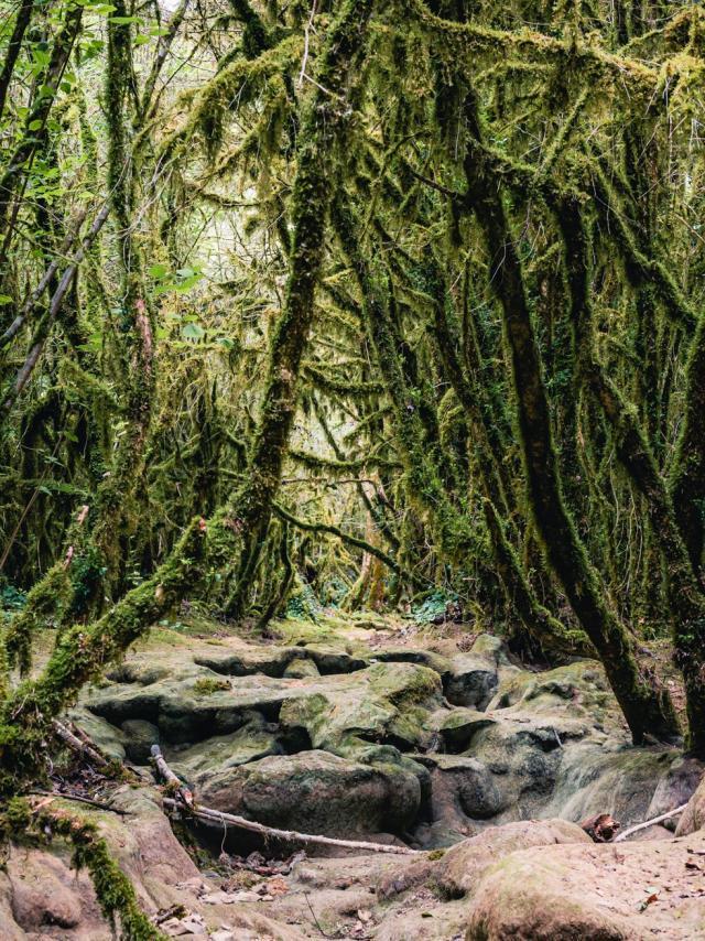 Forêt sur le circuit de cabéou à Bruniquel