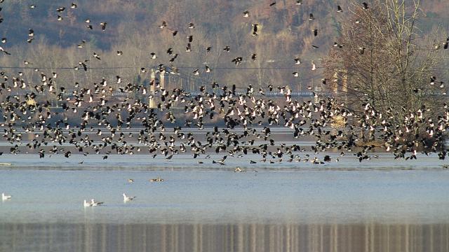 Réserve ornithologique à Saint-Nicolas de la Grave