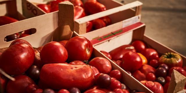 Caisses de tomates - Jardins de Cocagne de Limon - Vauhallan