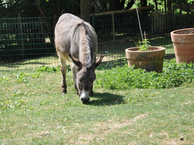Ferme pédagogique de Bel Air - âne
