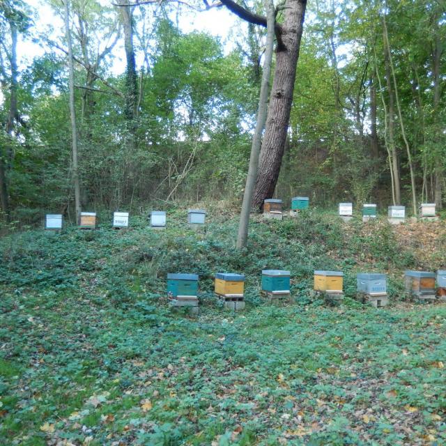 Miellerie de la Mérantaise - ruches