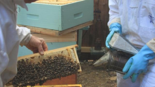 Miellerie de la Mérantaise - apiculteurs