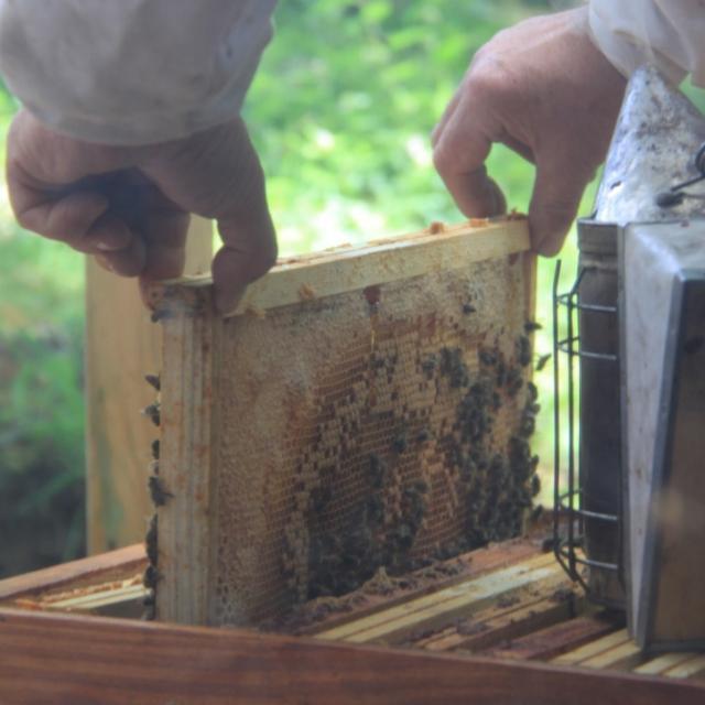 Miellerie de la Mérantaise - rayon avec abeille