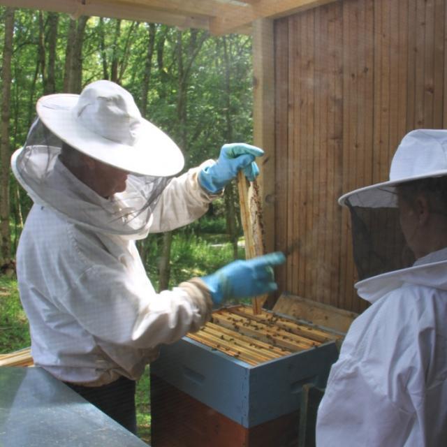 Miellerie de la Mérantaise - apiculteurs, ruche