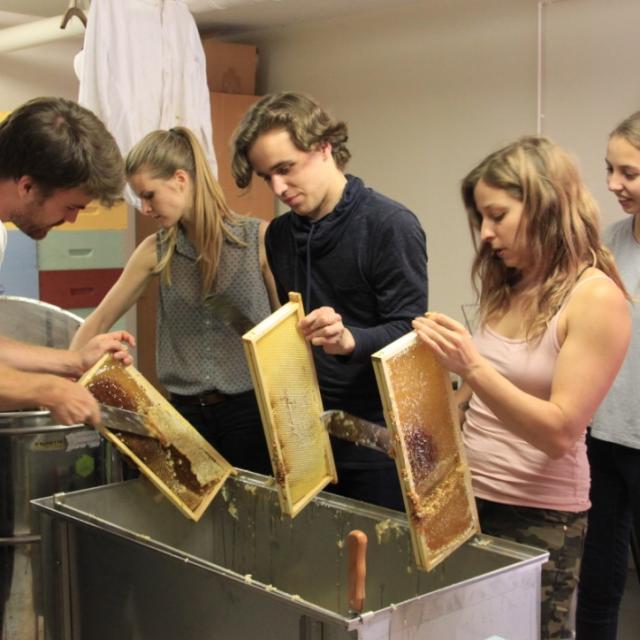 Miellerie de la Mérantaise - récolte du miel ?