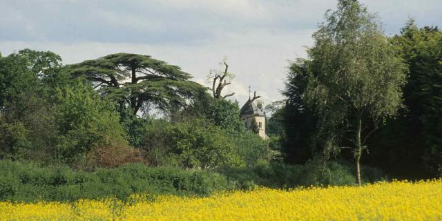 Champ de colza et forêt