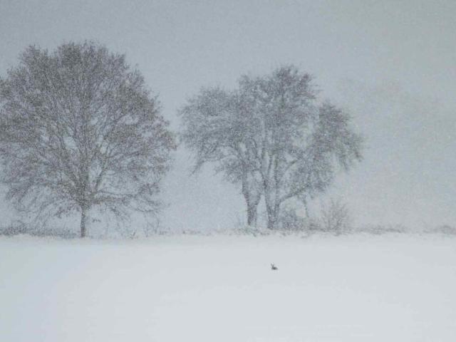Hiver - Arbres sous la neige