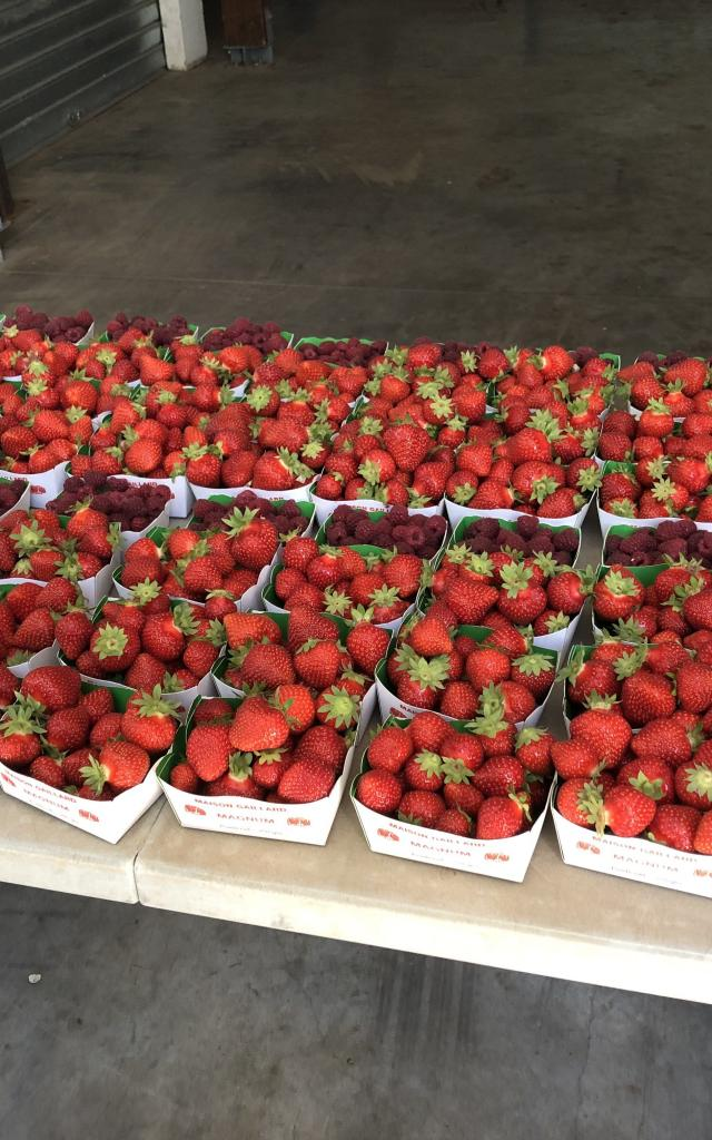 Amap De La Vallée - Distribution de fraises