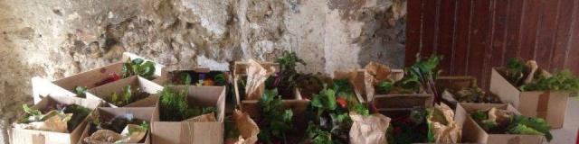 Epi Castelfortain - Paniers de fruits et légumes