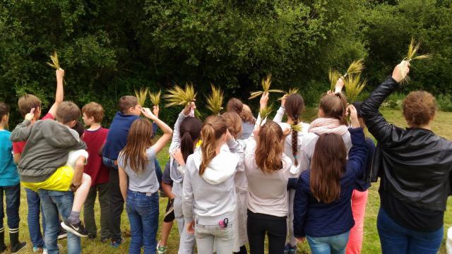 Activités enfants plateau de Saclay, épi de blé