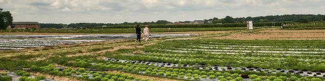 Ferme De Viltain - champs salades cueillette
