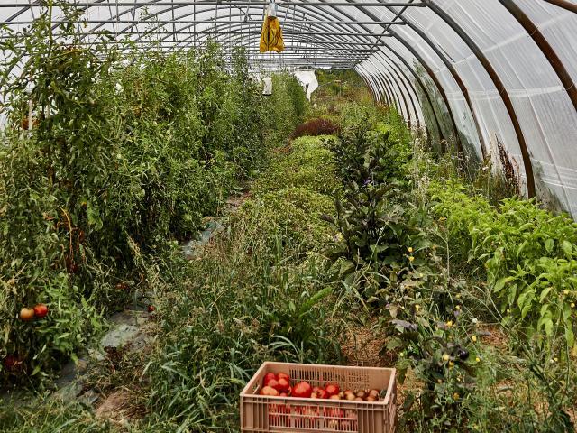 Plants de légumes de la Ferme de la Closeraie