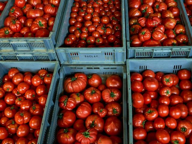 Ferme Trubuil - caisses de tomates