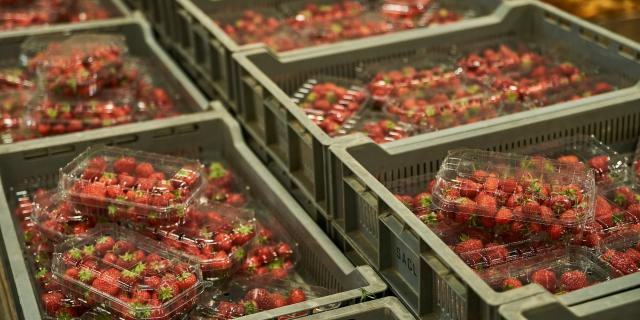 Ferme Trubuil - barquettes de fraise