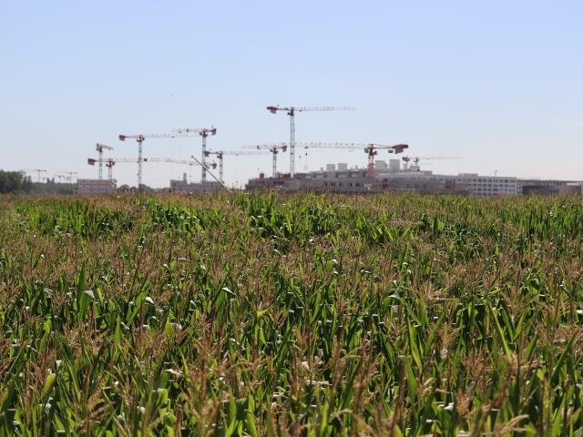 Ferme de Moulon - champ de maïs de différentes variétés