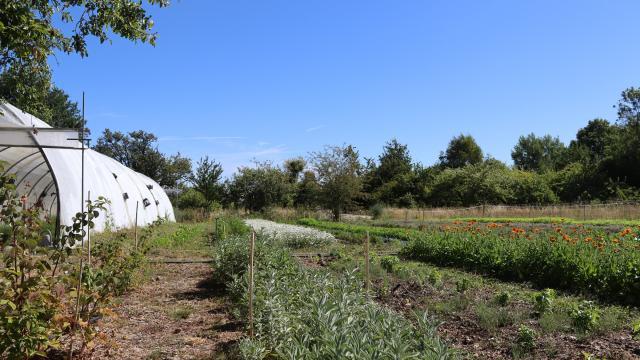 Aline Aurias, l'Enracinée - plantes à tisane et aromates