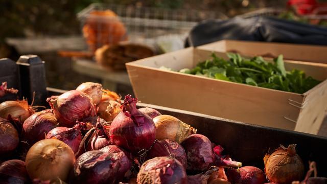 Oignons et Salade - La Ferme de Serge