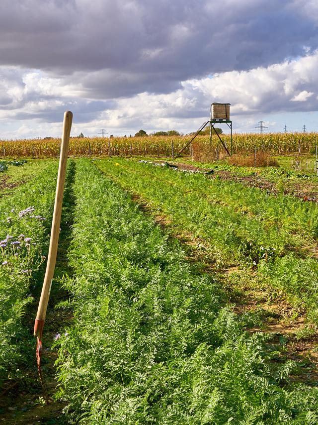 Récolte - La ferme de Serge
