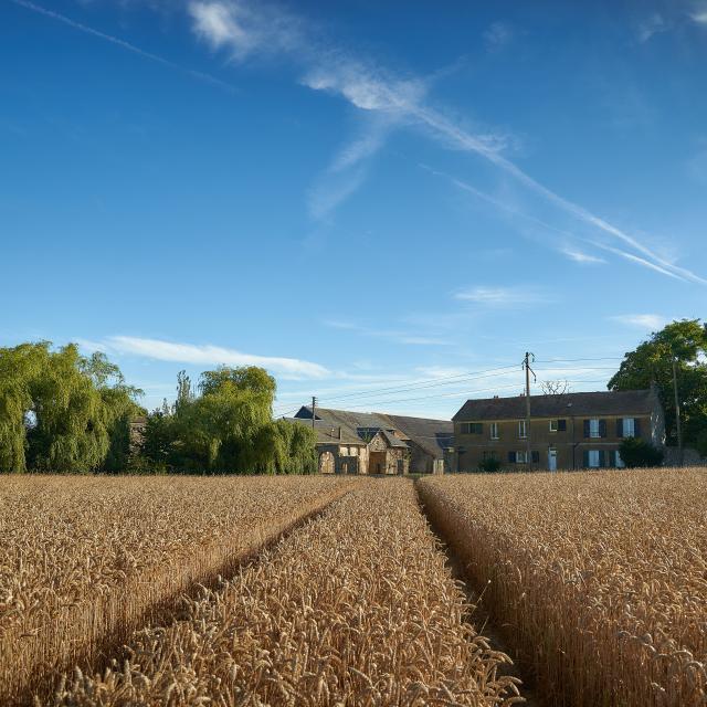 Ferme d'Orsigny - champ de blé et corps de ferme