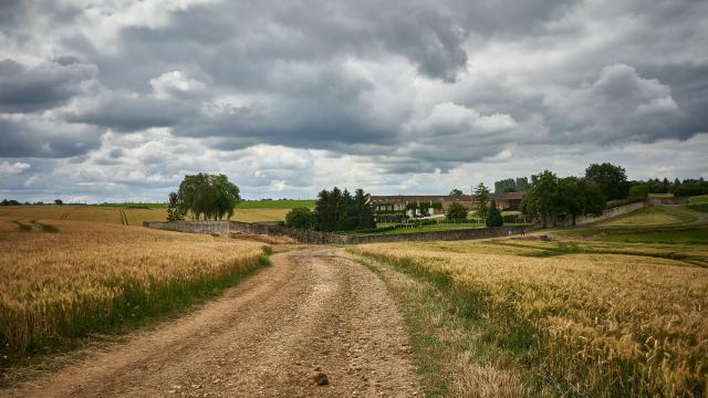 Ferme Du Trou Salé - chamin dans les champs