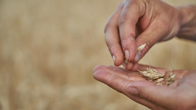 Ferme de Villaroy - mains, grains