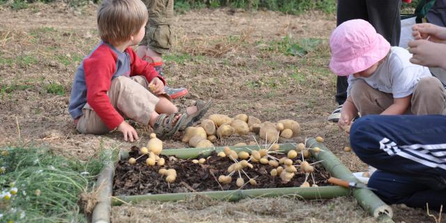 Activités enfants avec des pommes de terres - AMAP Jardins de Cérès