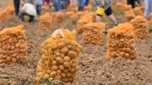 Sacs de pommes de terre - AMAP Jardins de Cérès