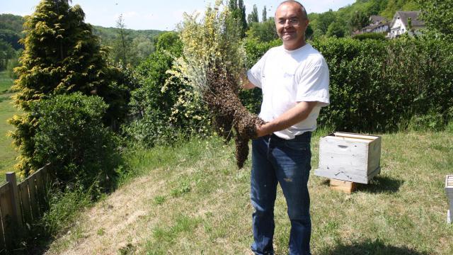 Miellerie de la Mérantaise - Essaim d'abeilles