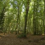Forêt de Chabrières à Guéret