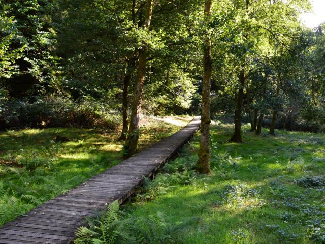 Passerelle en bois menant à la tourelle dans les gorges du Verger à Bourganeuf