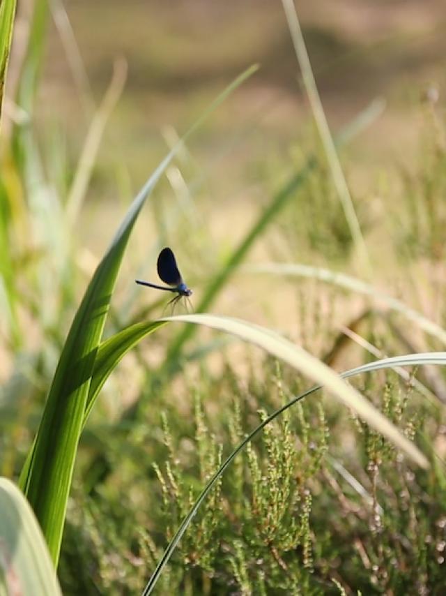 Nature Creuse