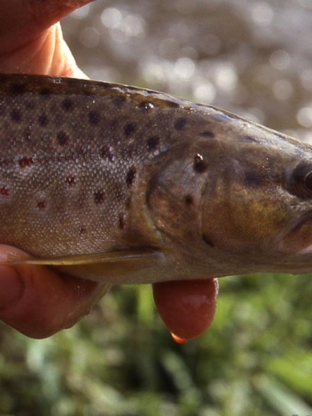 Truite Pêche en Creuse