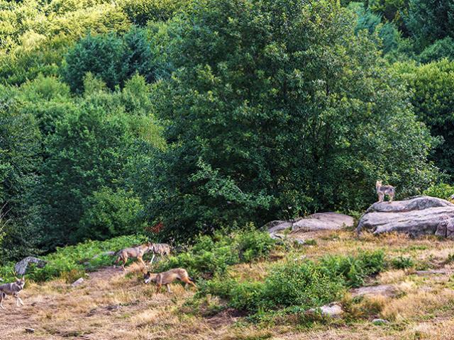 Sainte Feyre Loupsdechabriere Groupe S.frey 2015 4