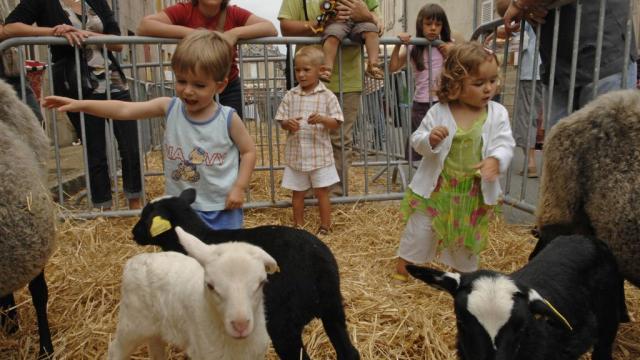 Les Moutonnades De Bénévent L'abbaye Creuse©j. Damase Adrt23, La Creuse