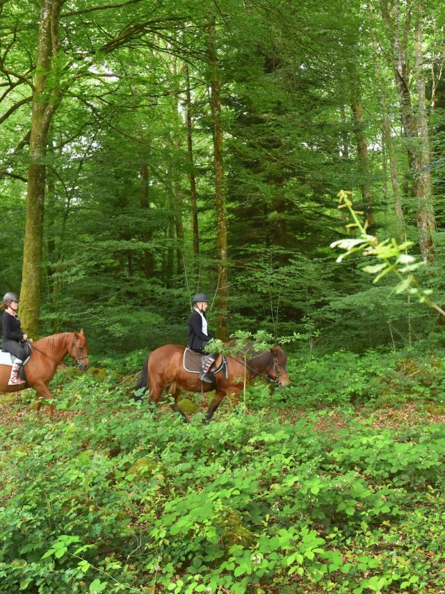 Forêt d'Epagne-equitation-vtt-rando-Syndicat Mixte du Pays Sud Creusois-02/07/2016