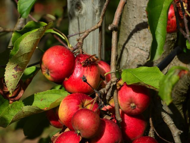 fruits-bsavarypro-1.jpg