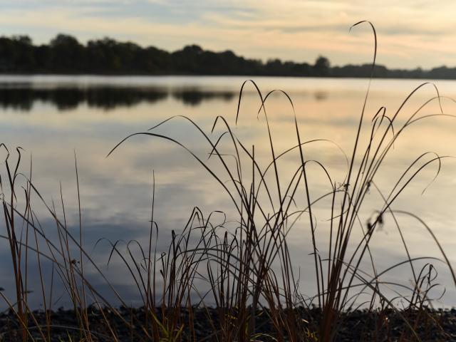 Etang des landes-réserve naturelle nationale-Lussat-dépt.23