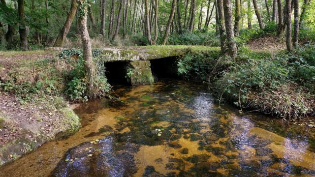 Pont planche les cascades d'Augerolles