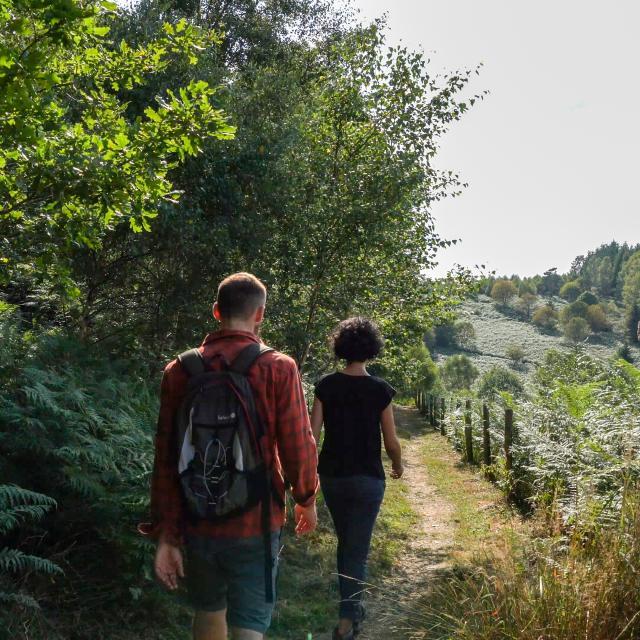 Randonnée pédestre - PNR Millevaches