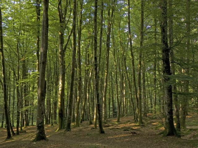 Foret Chabrieres 3422