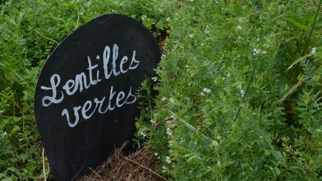 Potager - La Creuse