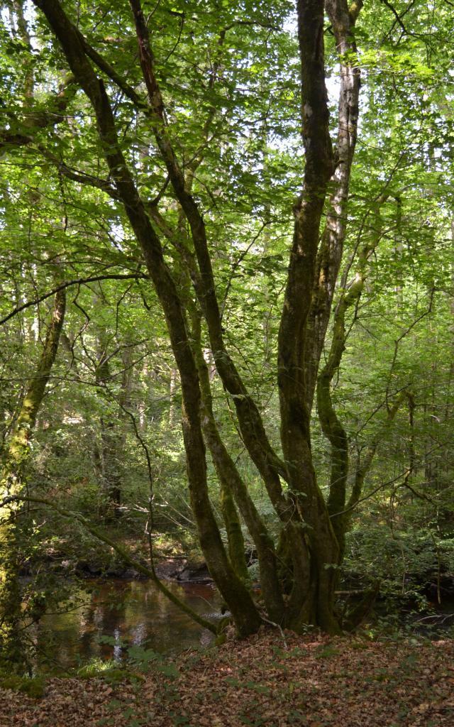 Forêt en Creuse