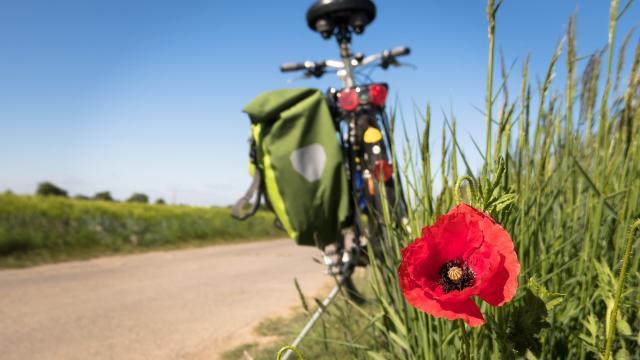 cycling-5178398-1920.jpg