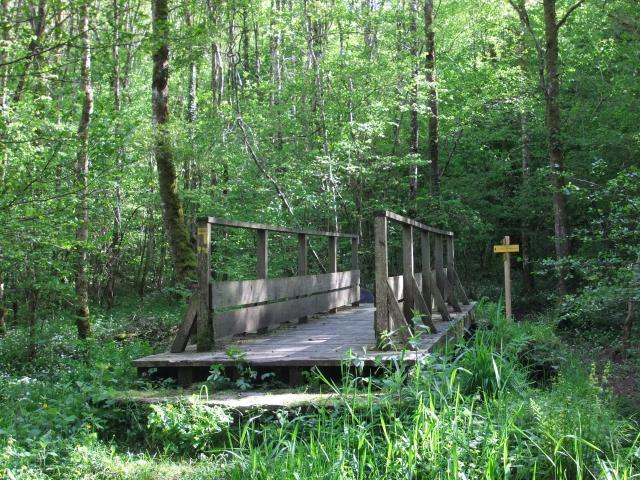 La forêt d'Epagne