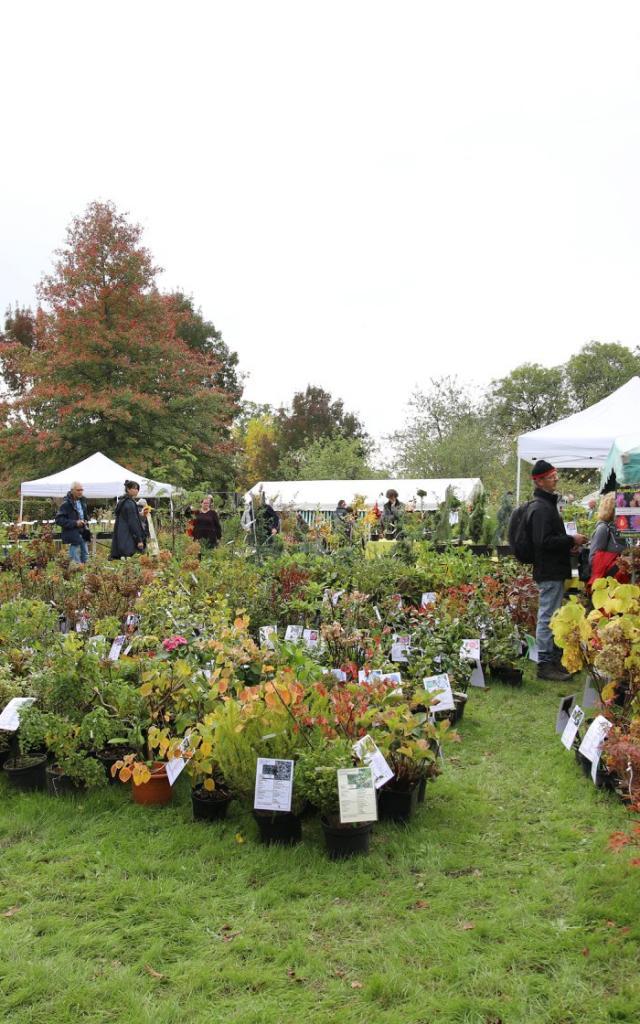Arboretum De La Sédelle Fete Des Plantes